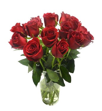 14 Red brazilian Roses vase not included