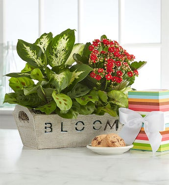 Bloom Dish Garden