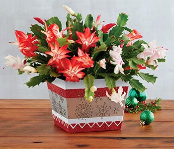 Festive plants and arrangements