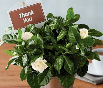 Say thanks with flowers & plants