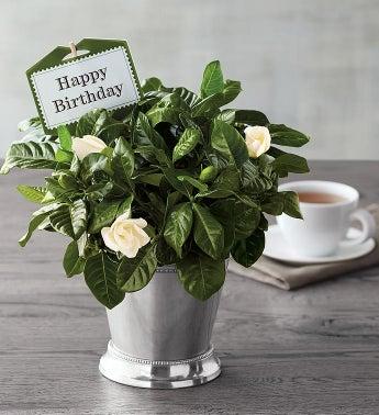 Birthday Flowers Plants