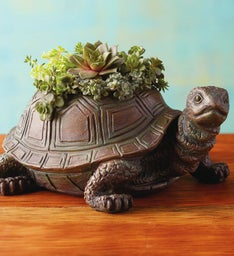 Turtle with Succulents