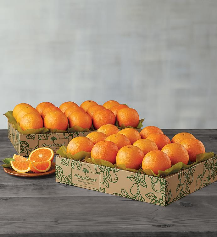 Navel Oranges - Two Trays