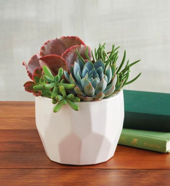 Succulents in Geometric Pot