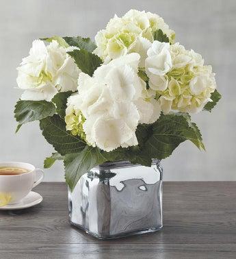 Plants Flowering Plants Indoor Plant Gifts Harry David