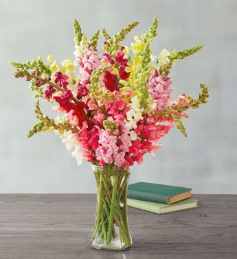 Snapdragon Bouquet
