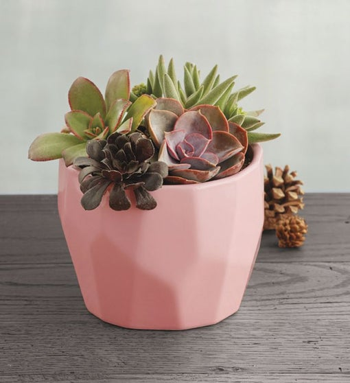 Succulents in Pink Geometric Pot