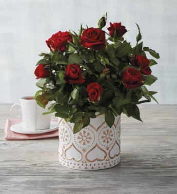 """4"""" Red Mini Rose in Rose Gold Planter"""