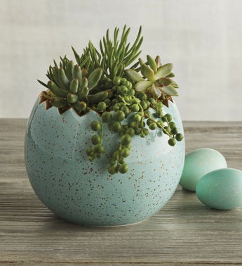 Easter Egg with Succulents