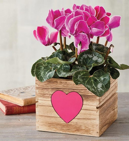 "4"" Cyclamen in Heart Crate"